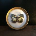 Papillon dans cadre rond bombé